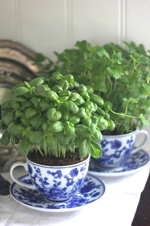 Easy way to make your #herbgarden at your home