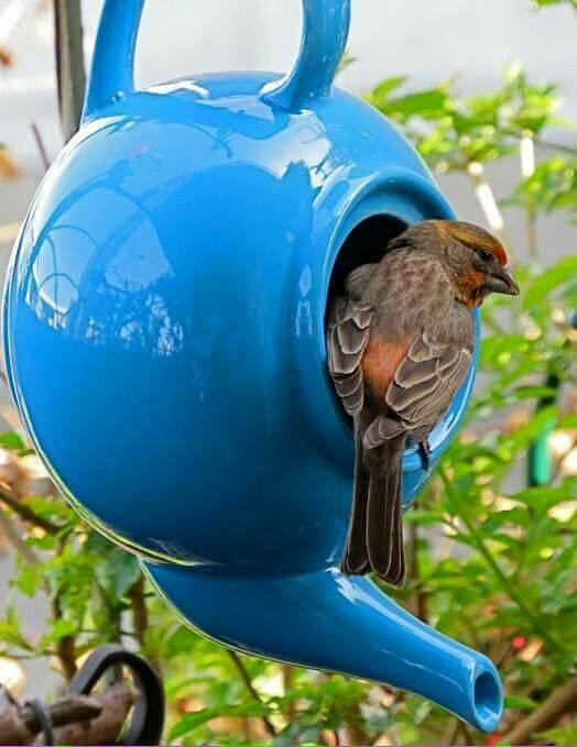 Unused tea pot as Bird House for #outdoorGarden