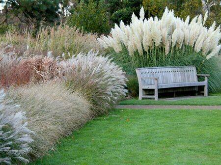 Ornamental grass in your #garden looks fabulous.  #gardening