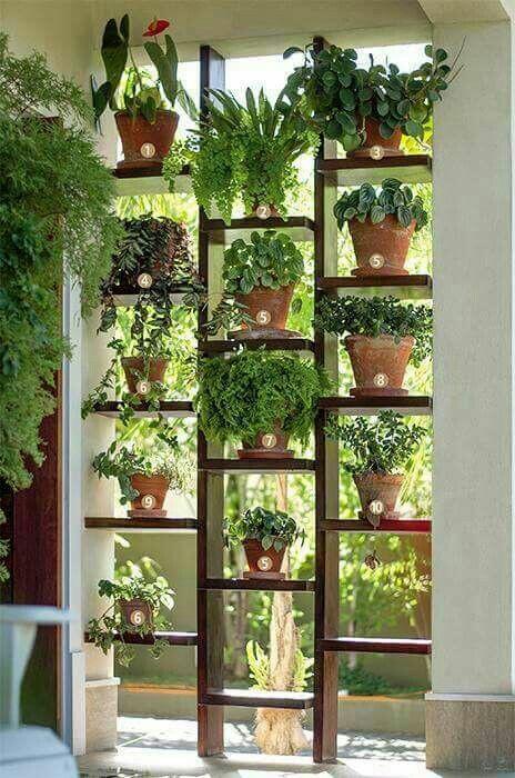 Plants for room divider. Nice idea 👌