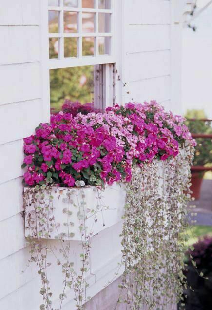 Window box #planter