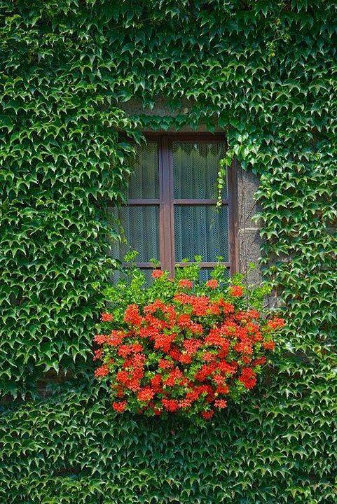 #gardening #garden #window