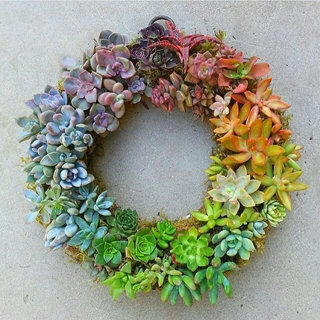 Wonderful Succulent for this #Christmas