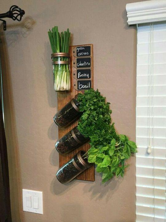 #indoor herb garden