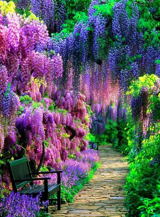 Sharpex Engineering,  holi, color, flowers, gardening
