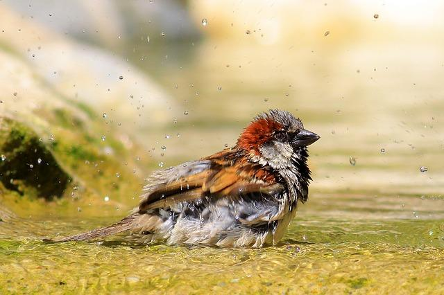 Save Sparrow , Save Nature !  #WorldSparrowDay