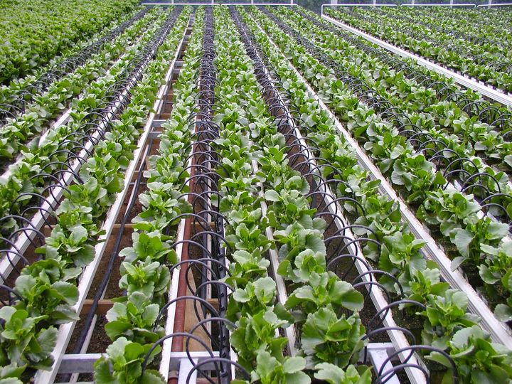 Use Drip Irrigation for planting and save Water for future.