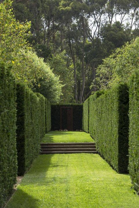 Nice green wall.. #Gardening