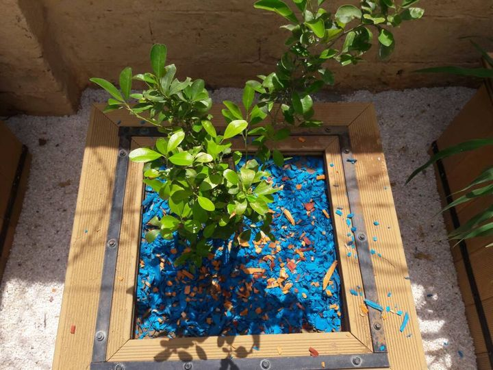 Deko Chip (Blue) Plant Decorative Chips for Backyard Decor by Sharpex @ http://www.amazon.in/dp/B06XGZHYBH