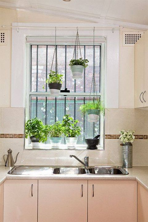 Mini #garden inside the kitchen