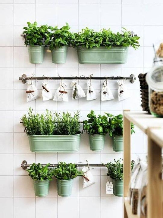 Planting herbs into kitchen is the best idea.!