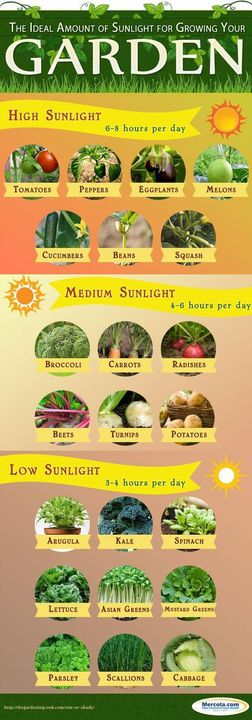 Know the ideal amount of sunlight for growing your garden.