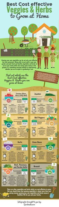Best cost effective Herbs to Grow at home.