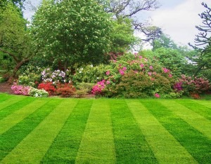 Taking care of your lawn to keep it green and smiling.