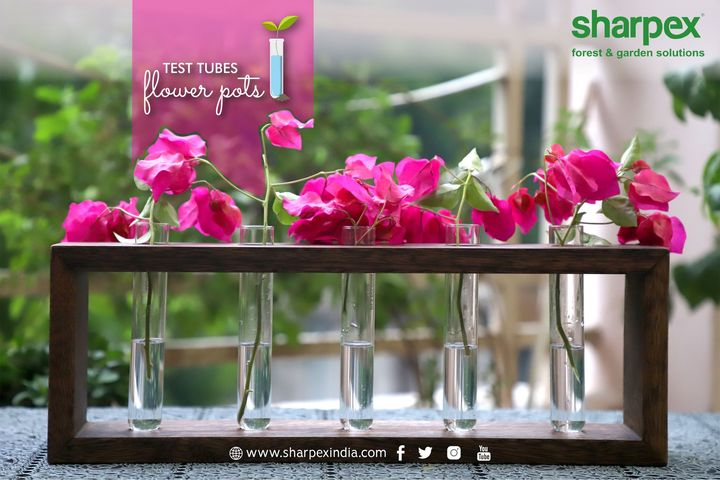 Test tubes flower pots  https://sharpexindia.com/  #gardening #sharpexindia #sharpex #gardeningproducts #Lawncare #Simplygardenspares #Selfpropelledlawnmower #gardenstorage #Growwithgarden #flower #flowerpot #garden  Ahmedabad, India Gandhinagar, Gujarat Surat, Gujarat Vadodara, Gujarat, India