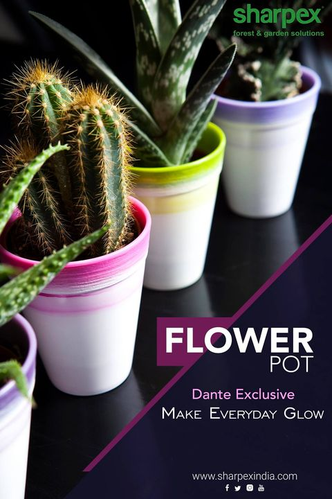 Flower Pot - Dante Exclusive Make Everyday Glow  https://sharpexindia.com/  #gardening #sharpexindia #sharpex #gardeningproducts #Lawncare #Simplygardenspares #Selfpropelledlawnmower #gardenstorage #Growwithgarden #flower #flowerpot #garden #Secateur #plants