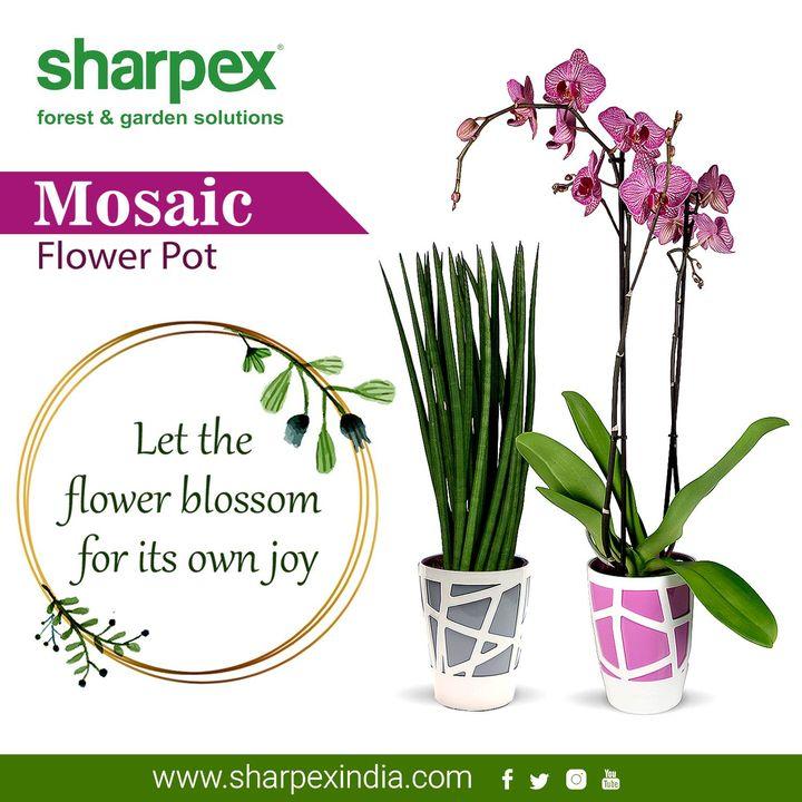 Let the #flower blossom for its own joy  https://sharpexindia.com/gardening/  #gardening #gardeningproducts #gardenproduct #gardenpot #happy #plantershelfstand #flowerpots #plant #garden  Ahmedabad, India Gandhinagar, Gujarat Vadodara, Gujarat, India