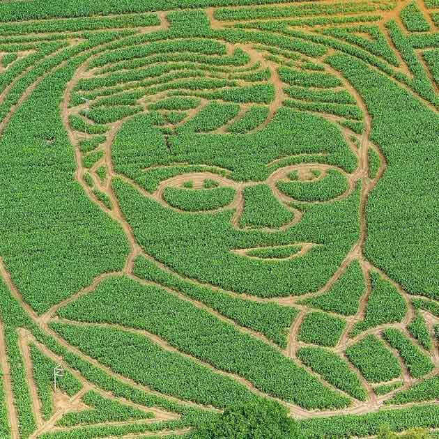 Plantation Art