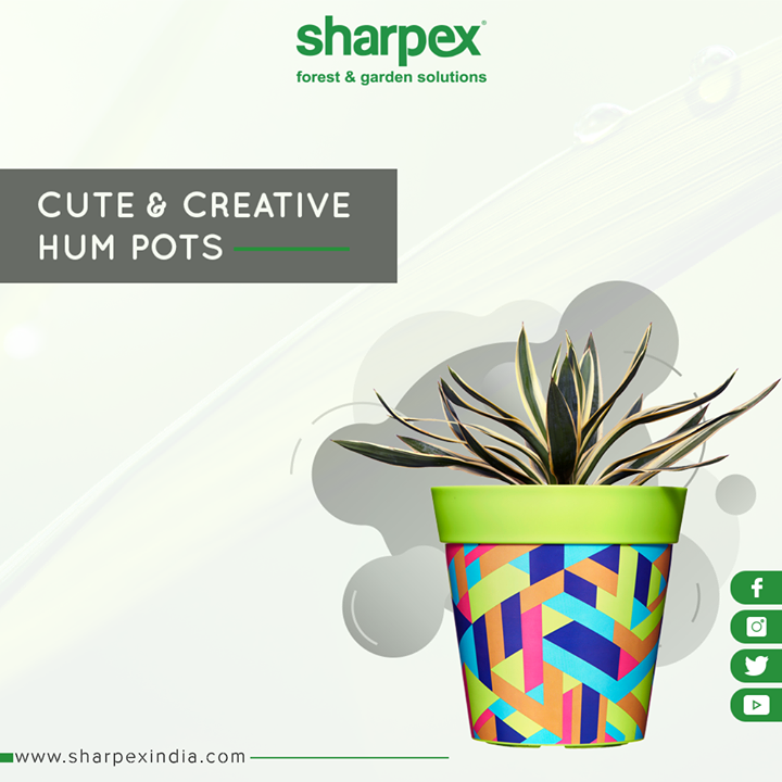 Give a funky transformation to your plants as well!   #GardeningTools #ModernGardeningTools #GardeningProducts #GardenProduct #Sharpex #SharpexIndia