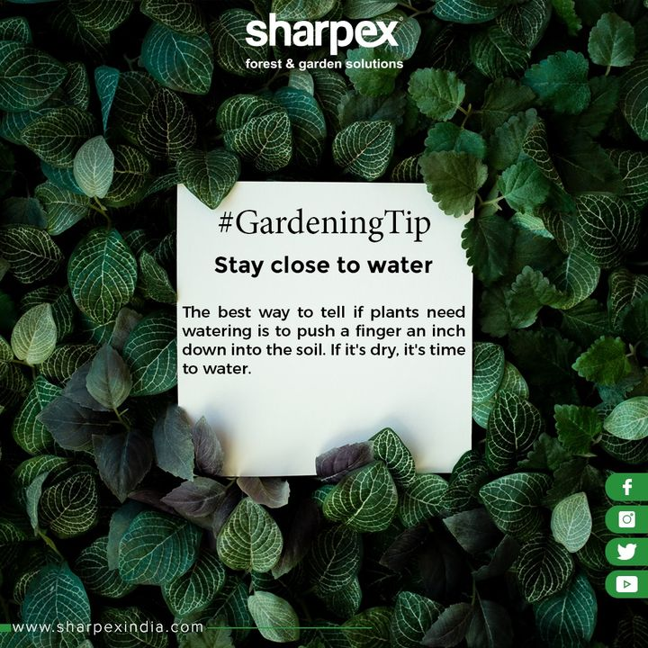 Stay close to water.  One of the best gardening tips you'll ever get is to plan your new garden near a water source. The best way to tell if plants need watering is to push a finger an inch down into the soil. If it's dry, it's time to water.  #GardeningTips #GardeningTools #ModernGardeningTools #GardeningProducts #GardenProduct #Sharpex #SharpexIndia