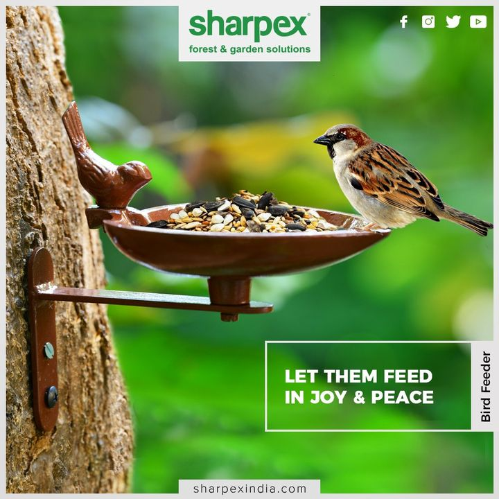 No more hurry, No more worry. Let them feed in joy & peace.  This is perfectly designed to hang in your garden, balcony or backyard to be used as bird feeder.  #BirdFeeder #Birds #Gardenspaces #Greengarden #Gardening #GardenLovers #Passionforgardening #Garden #GorgeousGreens #GardeningTools #ModernGardeningTools #GardeningProducts #GardenProduct #Sharpex #SharpexIndia