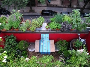 Second part of Terrace #gardening