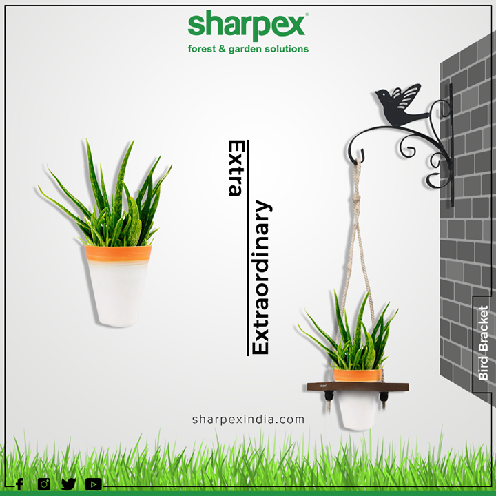 Decorate your home and hang your favorite pots or lanterns in the Bracket Hanger by Sharpex which will change the look of your home or balcony. It's easy to hang and can be mounted on any fence, door, or balcony.  #ExtraFormat #TrendingFormat #TrendingNow #GardeningTools #ModernGardeningTools #GardeningProducts #GardenProduct #Sharpex #SharpexIndia