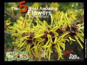 A must watch presentation on the 10 most amazing flowers of the world #amazing