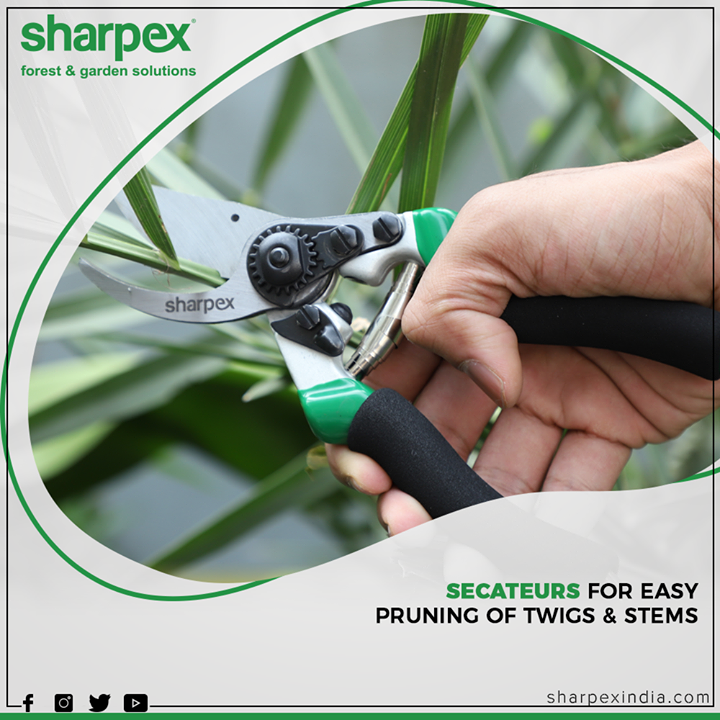 This gardening secateurs scissor is ideal for gardening and maintaining the growth of backyard bushes; these pruning scissors make gardening comfortable and promote simple to your shrubs, greenery, plants, flowers, fruits, and trees.  #GardeningTools #ModernGardeningTools #GardeningProducts #GardenProduct #Sharpex #SharpexIndia