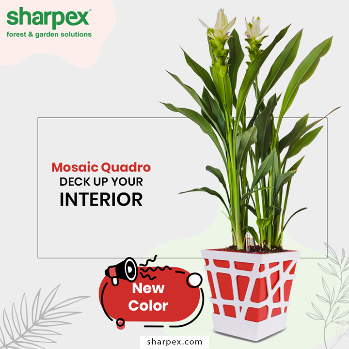 New color Mosaic Quadro is perfect for decorating desks, bookshelves, tables, windowsills, countertops, and more, they will look quite charming  #GardeningTools #ModernGardeningTools #GardeningProducts #GardenProduct #Sharpex #SharpexIndia