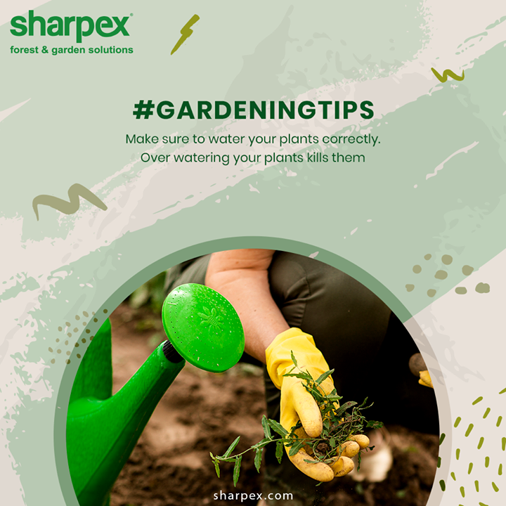 Make sure to water your plants correctly. The roots of the plant take up water but they also need air to breathe. Over-watering, in simple terms, drowns your plant.  #GardeningTips #GardeningTools #ModernGardeningTools #GardeningProducts #GardenProduct #Sharpex #SharpexIndia