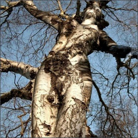 Is this a tree or Nature's Sculpture?