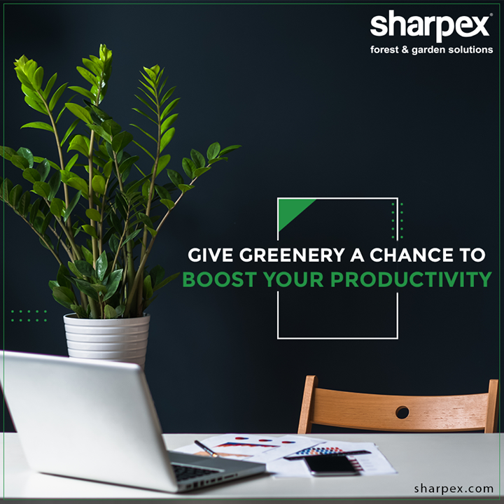Get the indoor plants in stackable pots to make the interior of your work-space more lively. Give greenery a chance to boost your productivity with Sharpex Gardening Community.  #GardeningTools #ModernGardeningTools #GardeningProducts #GardenProduct #Sharpex #SharpexIndia