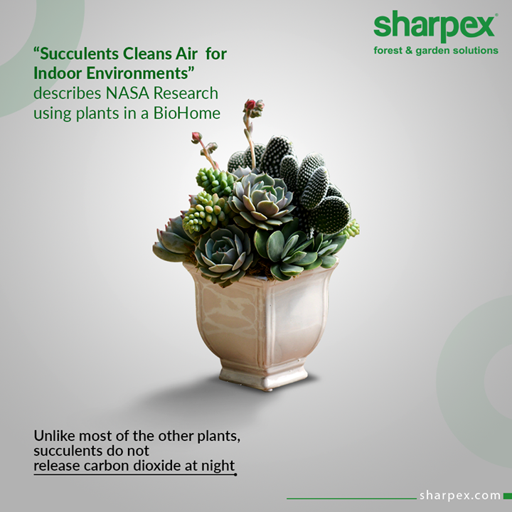 "Take a look at the stunning facts about the succulents:  ""Succulents Cleans Air for Indoor Environments"" describes NASA Research using plants in a BioHome.   Unlike most of the other plants, succulents do not release carbon dioxide at night!  #Succulents #BioHome #GardeningTools #ModernGardeningTools #GardeningProducts #GardenProduct #Sharpex #SharpexIndia"