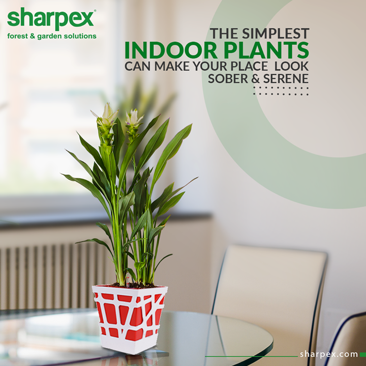 A pop of greenery looks good with any living room style!  Remember that the simplest indoor plants can make your place look sober and serene.  #JoyOfGardening #NatureLovers #GardeningTools #ModernGardeningTools #GardeningProducts #GardenProduct #Sharpex #SharpexIndia