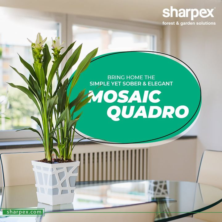 While getting your place decked-up for the festivities, remember to add a nature-friendly touch.  Bring home the simple yet sober & elegant Mosaic Quadro that will glam up the quotient of your home-décor.  #GardeningTools #ModernGardeningTools #GardeningProducts #GardenProduct #Sharpex #SharpexIndia