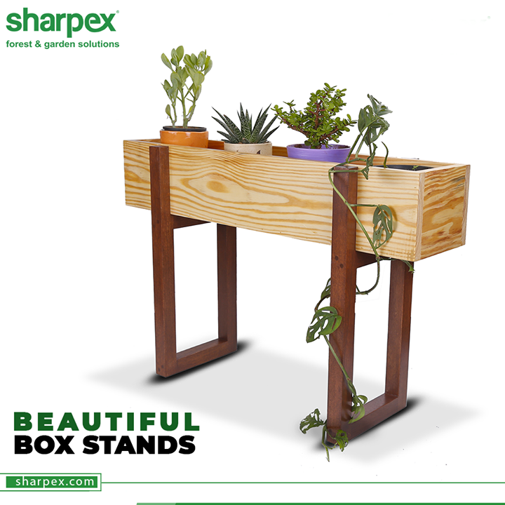 The beautiful box-stands are multi-functional and easy to assemble.  Think out of the box and keep your plants in vogue with #SharpexGardeningCommunity.  #SharpexGardening #BoxStands #ModernGardeningTools #GardeningProducts #GardenProducts #Sharpex #SharpexIndia