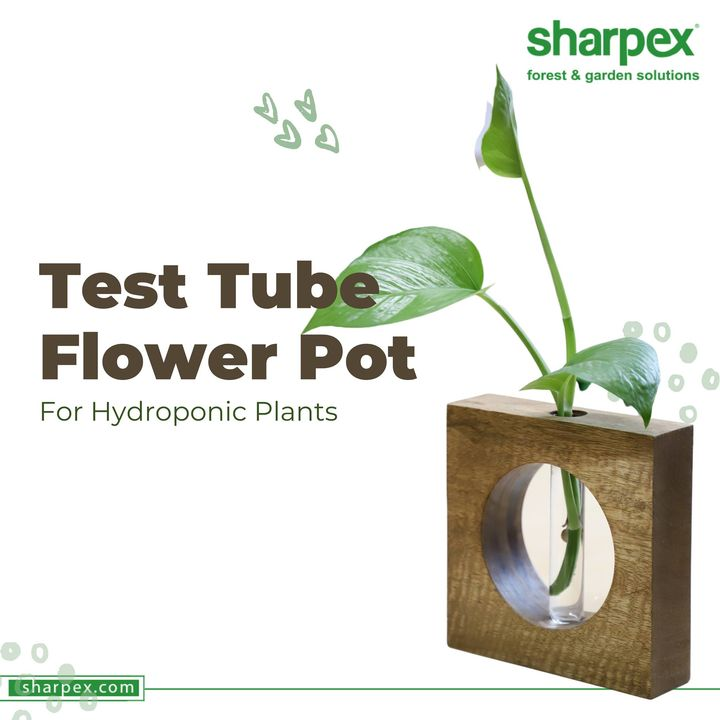 Sharpex Engineering,  flower
