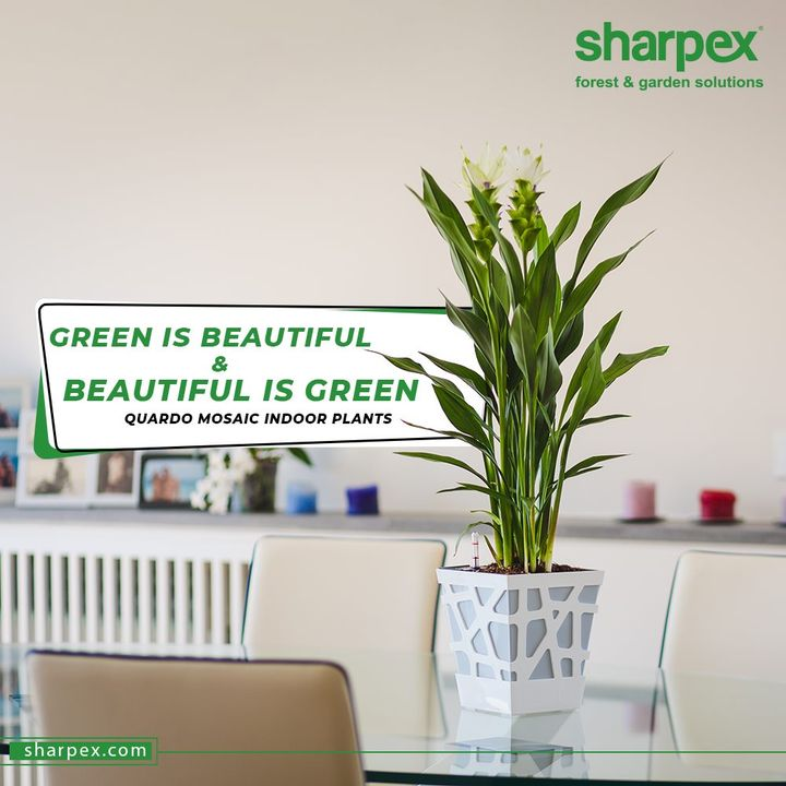 Sharpex Engineering,  homegarden