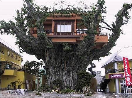 All those who want to live in this amazing tree house, please raise your hands!
