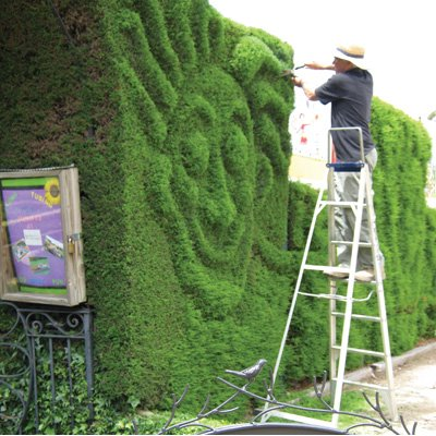Trim your garden with #Sharpex Hedge Trimmer