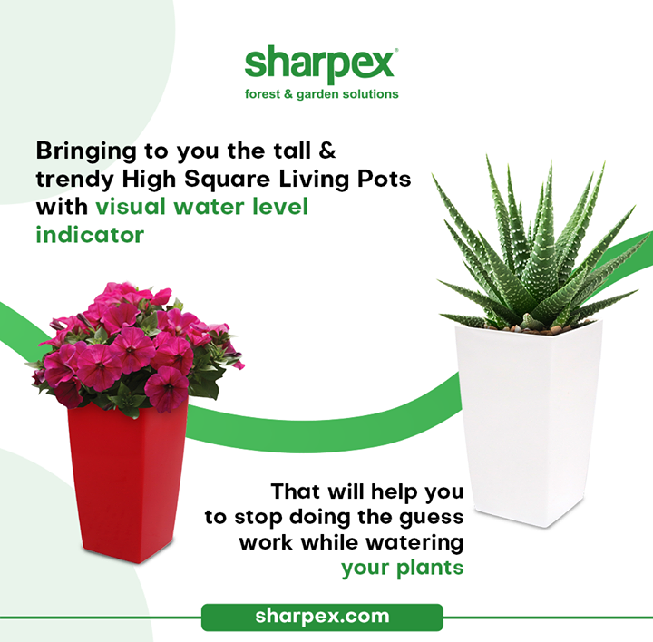 Bringing to you the tall & trendy High Square Living Pots with visual water level indicator that will help you to stop doing the guess work while watering your plants.  Take a look & bring home this innovative product from Sharpex Gardening Community  #HighSquareLivingPots #TallAndTrendyPots #CreativeGardeningAccessory #GardeningAccessories #GardeningTools #ModernGardeningTools #GardeningProducts #GardenProducts #Sharpex #SharpexIndia