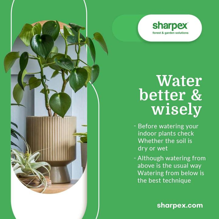 Water is vital for the life and survival of plants. But it is important that you water your plants wisely & correctly. Take a look at the watering tips & ensure including them into your plant watering regime: - Before watering your indoor plants check whether the soil is dry or wet  -Although watering from above is the usual way watering from below is the believed to be the best technique  Take delight in being a pro-active gardener and bring home the best gardening accessories from Sharpex Gardening And Community.  #CreativeGardeningAccessory #GardeningAccessories #GardeningTools #ModernGardeningTools #GardeningProducts #GardenProducts #Sharpex #SharpexIndia