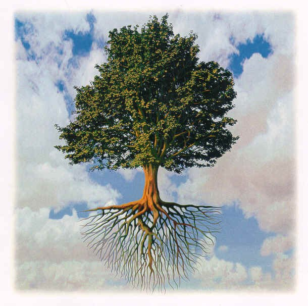 Did you know that:  -- One tree can meet the oxygen requirements of 20 people for one year. -- A healthy tree can provide as much cooling as 10 room size air conditioners operating 20 hours a day. -- On an average, a tree can absorb CO2 at the rate of 13 lbs. per tree per year. -- The value of e mature tree can be anything between $100 – to $ 10,000  Read about more such info and all about the benefits of planting more trees in our latest blog post http://sharpexblog.com/2012/09/the-benefits-of-having-trees-infographic/