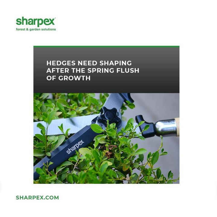 Hedging the plants help to create fanciful shapes to the garden.  Keep giving the desirable shapes to the plants and bushes around with Sharpex Hedge Shear.  #HedgeShear #SharpexHedgeShear #JoyOfGardening #GardeningAccessories #GardeningTools #ModernGardeningTools #GardeningProducts #GardenProducts #Sharpex #SharpexIndia