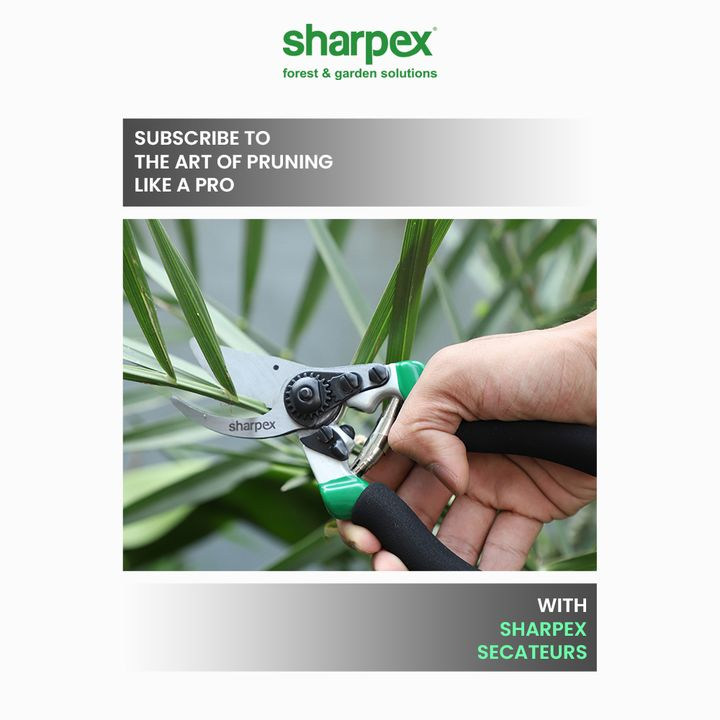 All the gardeners are the artists of their own kind.  Awaken your love for gardening and subscribe to the art of pruning like a pro with Sharpex Secateurs.  #GardeningAccessories #GardeningTools #ModernGardeningTools #GardeningProducts #GardenProducts #Sharpex #SharpexIndia #SharpexSecateurs