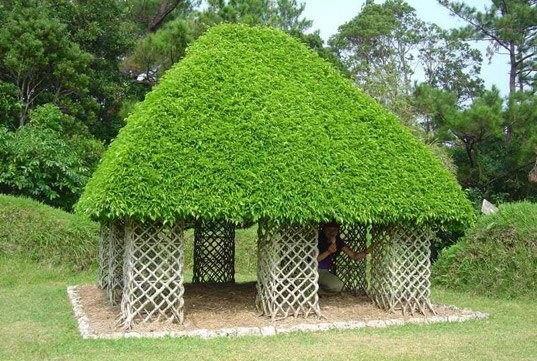 Ficus Hut - Okinawa Japan