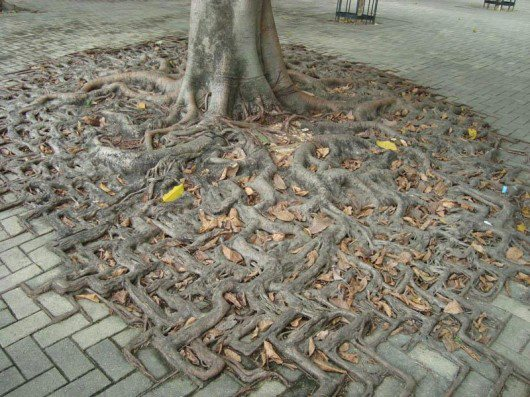 Tree Caught up in the Matrix!