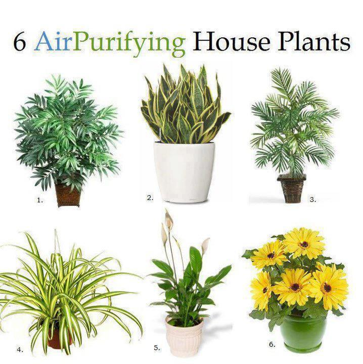 6 Air Purifying house plants..