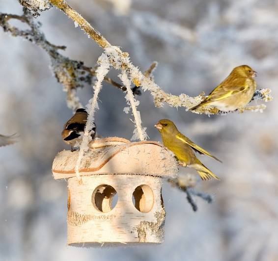 It's that time of year where we all start working on our garden. A garden isn't complete without the fluttering of bright colored birds. Attracting birds to your garden is key for having that peaceful